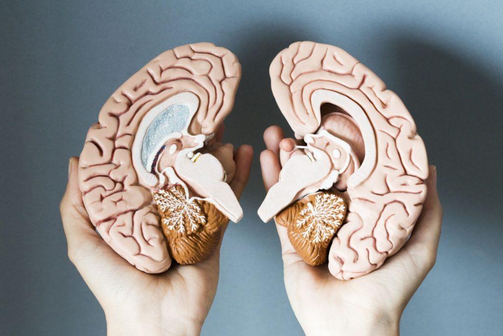 Упражнения, чтоб развить правое полушарие мозга